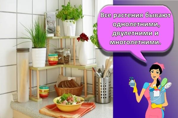 Все растения бывают однолетними, двулетними и многолетними.