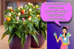 Какие цветы подходят для интерьера кухни, критерии выбора и требования к уходу