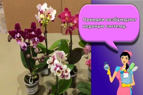 Орхидеи возбуждают нервную систему.