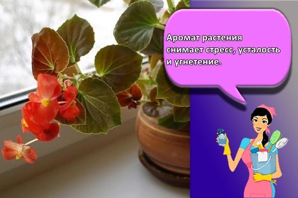 Аромат растения снимает стресс, усталость и угнетение.