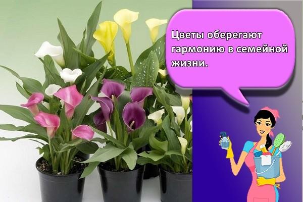 Цветы оберегают гармонию в семейной жизни.