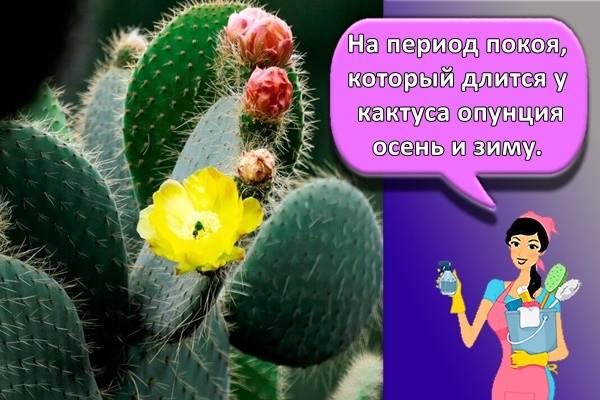 На период покоя, который длится у кактуса опунция осень и зиму