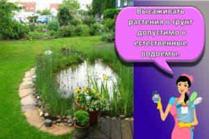 Какие растения лучше посадить вокруг пруда на даче и как правильно за ними ухаживать