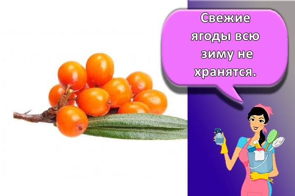 Свежие ягоды всю зиму не хранятся.