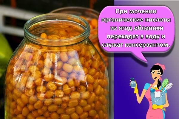 При мочении органические кислоты из ягод облепихи переходят в воду и служат консервантом.