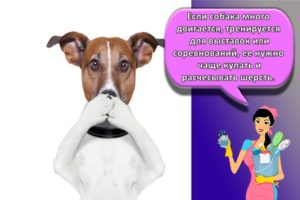 Как быстро избавиться от запаха собаки в квартире, ТОП 20 лучших средств