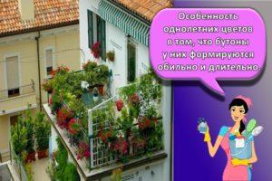 Идеи для озеленения балкона, какие цветы посадить и правила оформления