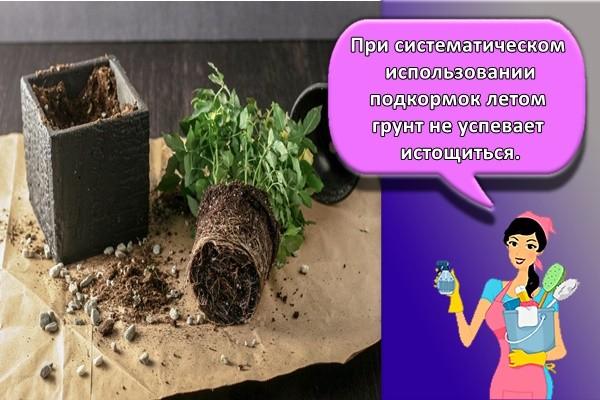 При систематическом использовании подкормок летом грунт не успевает истощиться.