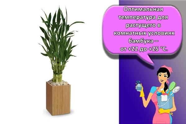 цветок бамбук