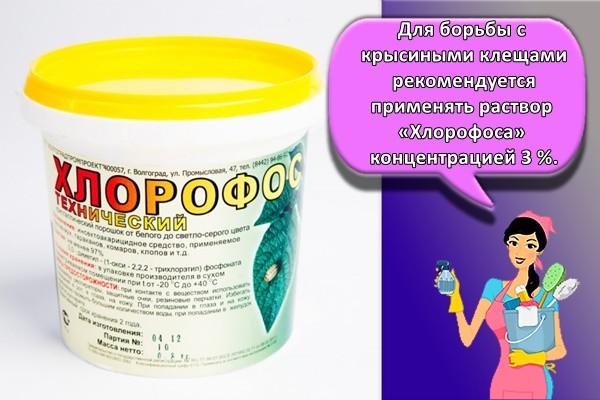 Для борьбы с крысиными клещами рекомендуется применять раствор «Хлорофоса» концентрацией 3 %.