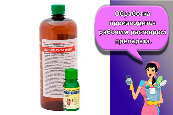 Обработка производится рабочим раствором препарата.
